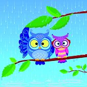 owl rain
