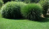 Spherical Grass Plants