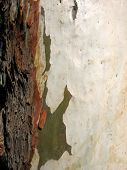 Contrasting Tree Bark poster