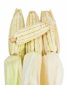 Many Corn Isolated On White Background