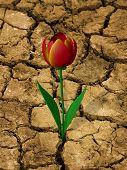 Drought-resistant flower