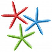 Finger Starfish. Vector.