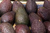Avocado on the Farmers Market , a close up shot