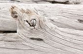 stock photo of driftwood  - Detail of weathered driftwood found on the Chilean coast in Patagonia - JPG