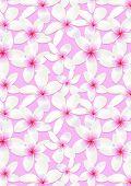 Frangipani Flowers.