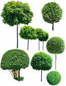green trees isolated on white background