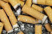closeup of a pile of cigarette butts off