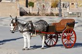 picture of hackney  - donkey and  tourist coach for children in Seville - JPG