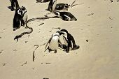 Penguin Beach