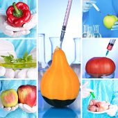image of genetic engineering  - Genetic engineering laboratory - JPG