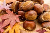 Chestnut and dried maple leave