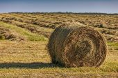 Hay bales on the field after harvest in rural Prince Edward Island, Canada.
