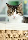 Cat on basket on wooden table on window background