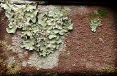 Lichens On Brick