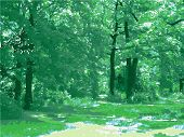 Beautiful Green Forest. Vector
