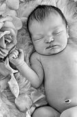 Closeup of newborn baby sleeping next to roses in black and white