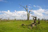 Dead tree in a field in a sunny spring