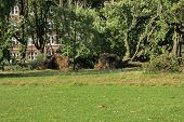 stock photo of wind blown  - Fallen trees blown over by heavy winds at the park - JPG