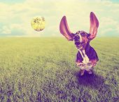 a cute basset hound chasing a tennis ball in a park or yard on the grass done with a retro vintage