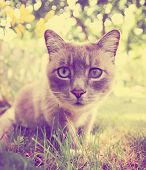 stock photo of spayed  - a pretty cat sitting in long grass done with a retro vintage instagram filter - JPG