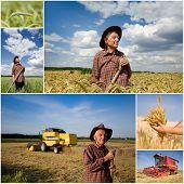 Harvesting Wheat Field
