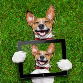 pic of laugh out loud  - super funny face dog lying on back on green grass and laughing out loud taking a selfie with tablet pc - JPG