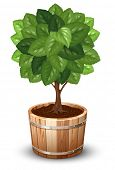 Bonsai tree in wooden tub. Vector illustration.