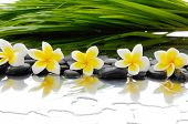 pic of frangipani  - Still life with Black stones and row of frangipani and palm leaf - JPG