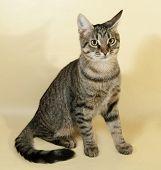 stock photo of yellow tabby  - Tabby kitten with yellow eyes sitting on yellow background - JPG