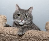 Striped Gray Cat Lies On Scratching Posts