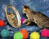 Kitten In A Mirror
