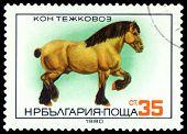 Vintage  Postage Stamp.  Heavy Horse.