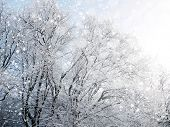 Winter background with falling snow during sunny day.