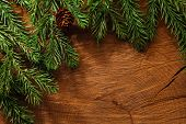 Evergreen tree background