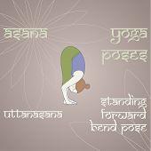 Yoga. Standing Forward Bend Pose.