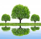 Trees reflecting on water surface