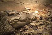 Crocodiles Are Old Leech On The Body.
