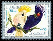 Vintage  Postage Stamp. Bird Probosciger Ateerrimus.