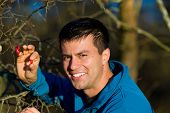 foto of dog-rose  - Attractive man picking up dog roses in forest - JPG