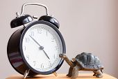 foto of tortoise  - The alarm clock on the book with tortoise - JPG