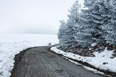 image of icy road  - Winterscape road passing by trees - JPG