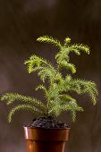 stock photo of midget  - Vertical shot of a young seedling plant sitting in a pot - JPG
