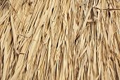 pic of ling  - Reed background from roof of antique hut - JPG