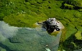 image of tortoise  - Image of an artificial pond with tortoise sculpture - JPG