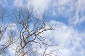picture of dead-line  - Dead tree without leaves on sky background - JPG