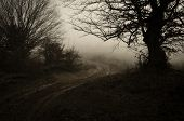 picture of scary haunted  - Road going trough dark haunted scary forest with fog - JPG
