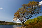 stock photo of inlet  - Tree growing crooked next to an Ocean inlet - JPG