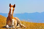 stock photo of apennines  - Beautiful red horses taken in Italian mountains  - JPG