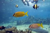 Colorfish