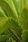 Green Fern Background - Vertical